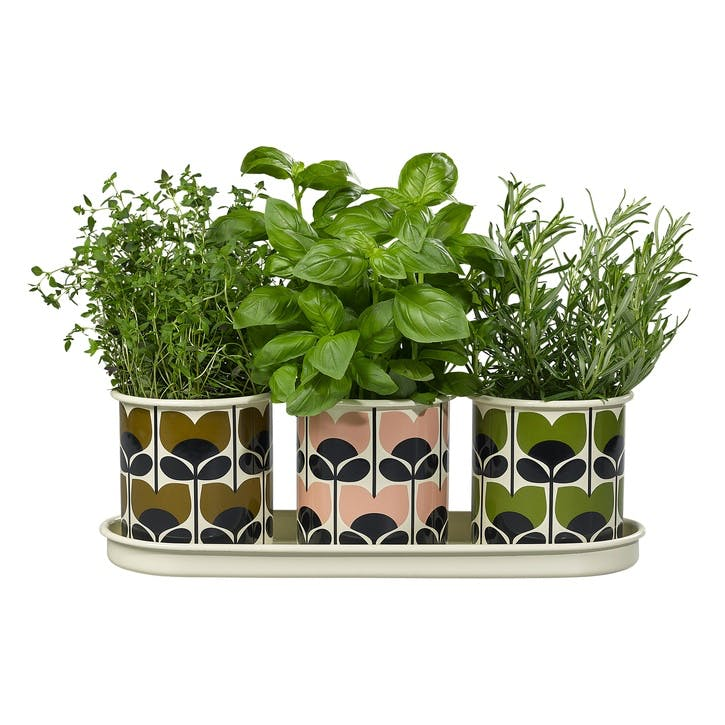 3 Herb Pots with Tray, Multi