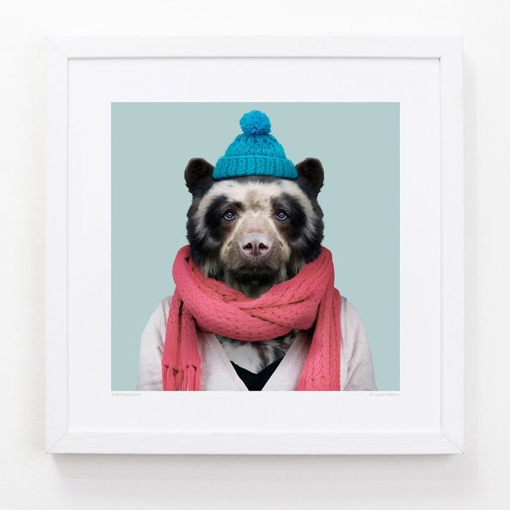 Zoo Portrait Spectacled Bear, 33cm x 33cm