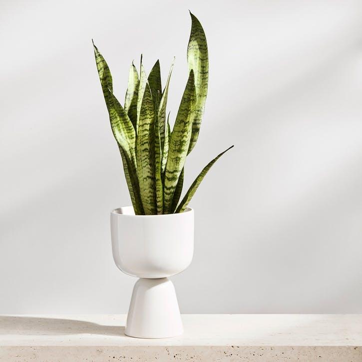 Nappula Plant Pot, White,Small