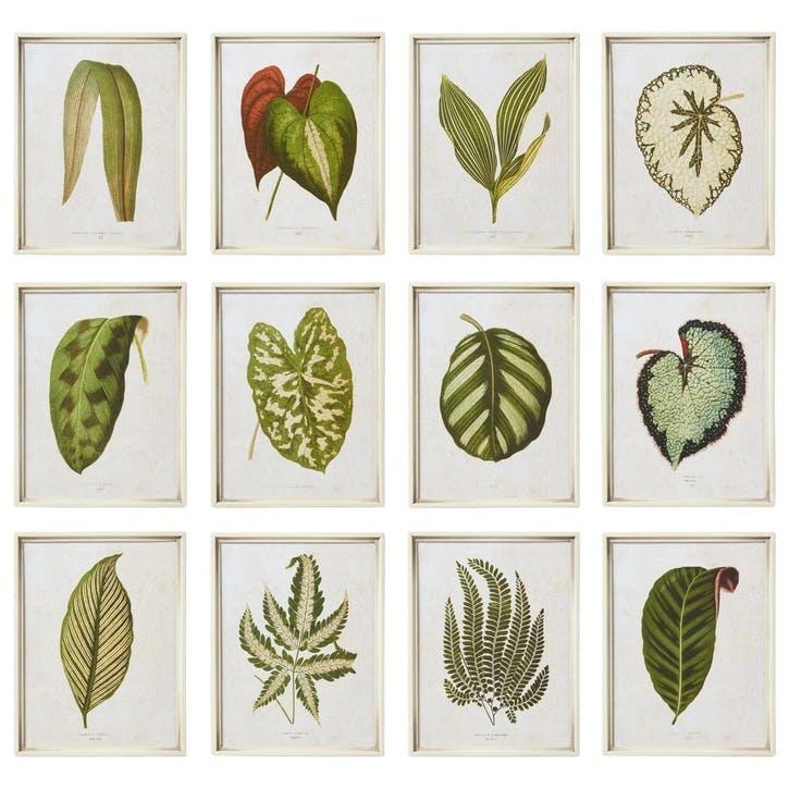 Exotic Leaf Framed Prints, Set of 12