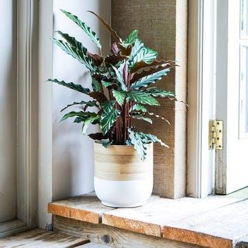 Bamboo Planter, H20cm, White