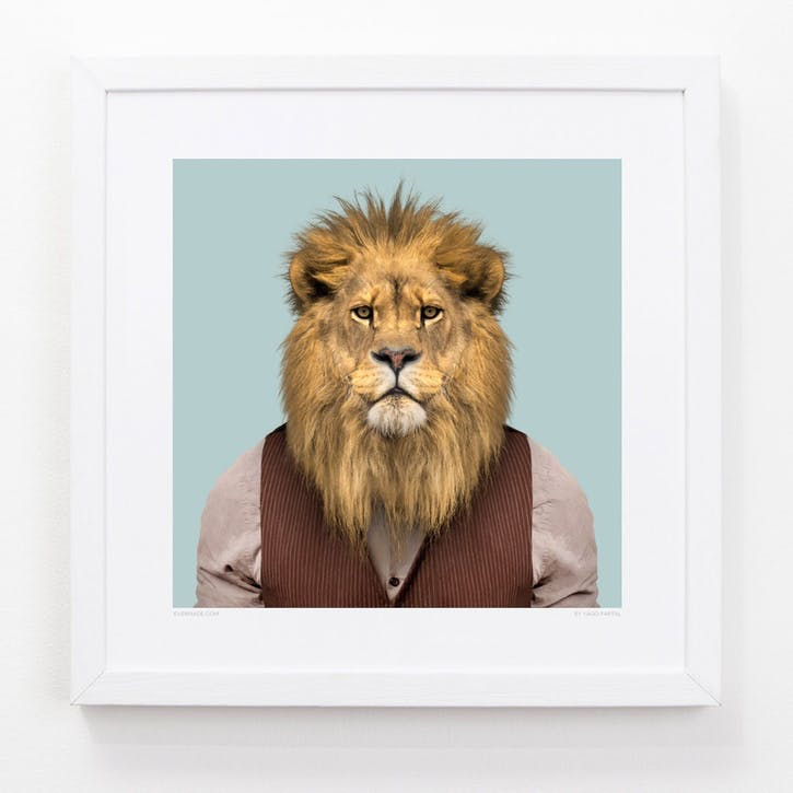 Zoo Portrait Lion, 33cm x 33cm