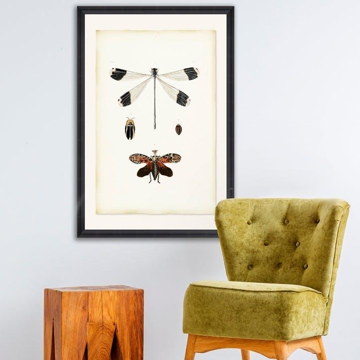 Libellula Black Framed Print,70 x 100cm