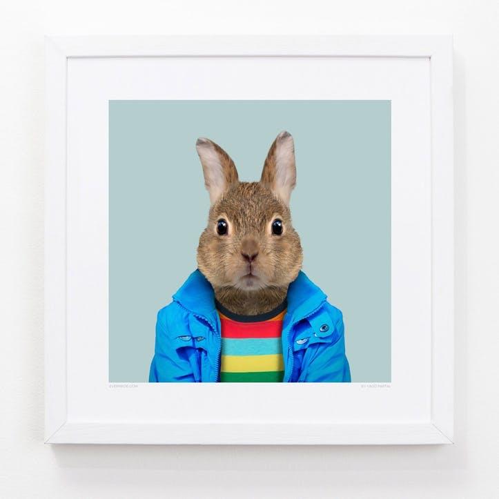 Zoo Portrait European Rabbit, 33cm x 33cm