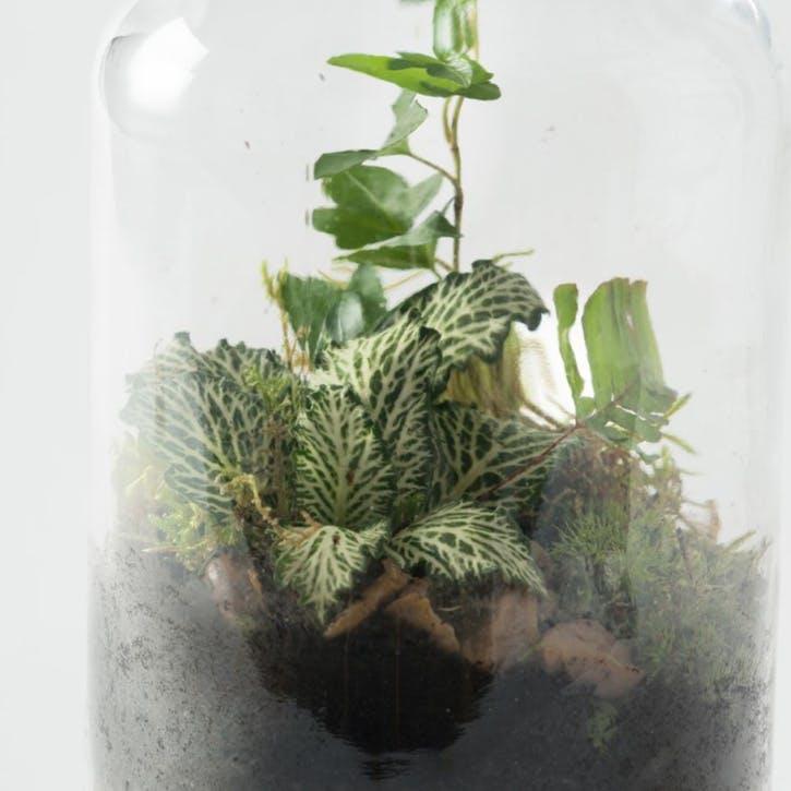 Minijohn Terrarium H18 x W9 x D9cm