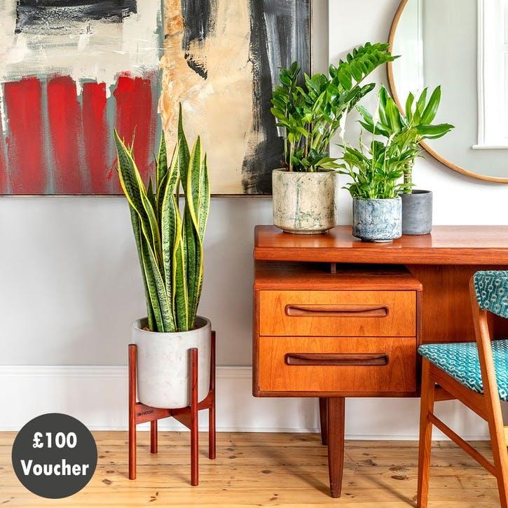 £100 Patch Plants Gift Voucher