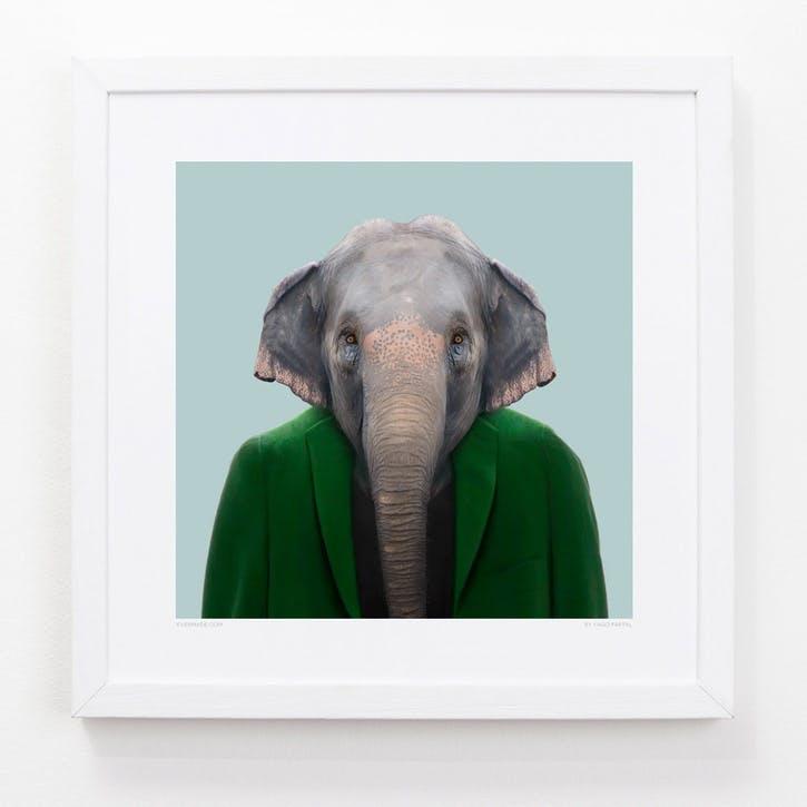 Zoo Portrait Asian Elephant, 33cm x 33cm