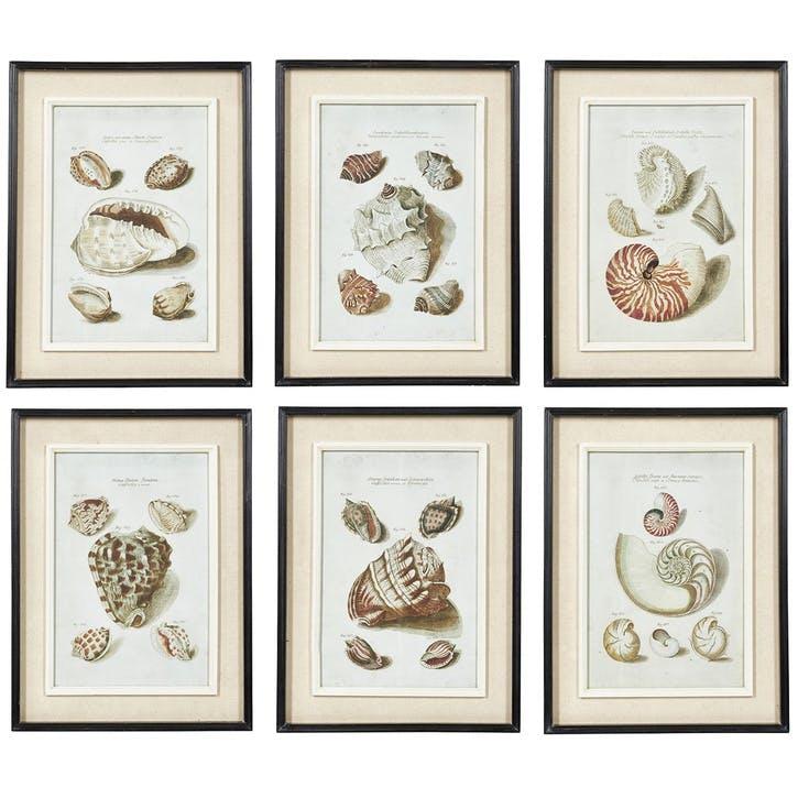 Seashell Framed Prints, Set of 6