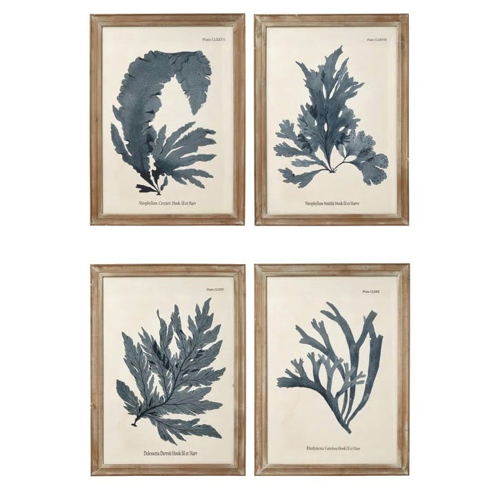 Seaweed Framed Prints, Set of 4