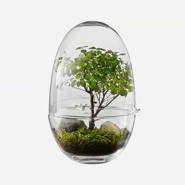 Grow Greenhouse Medium, Clear