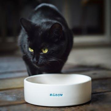 'Miaow' Cat Bowl
