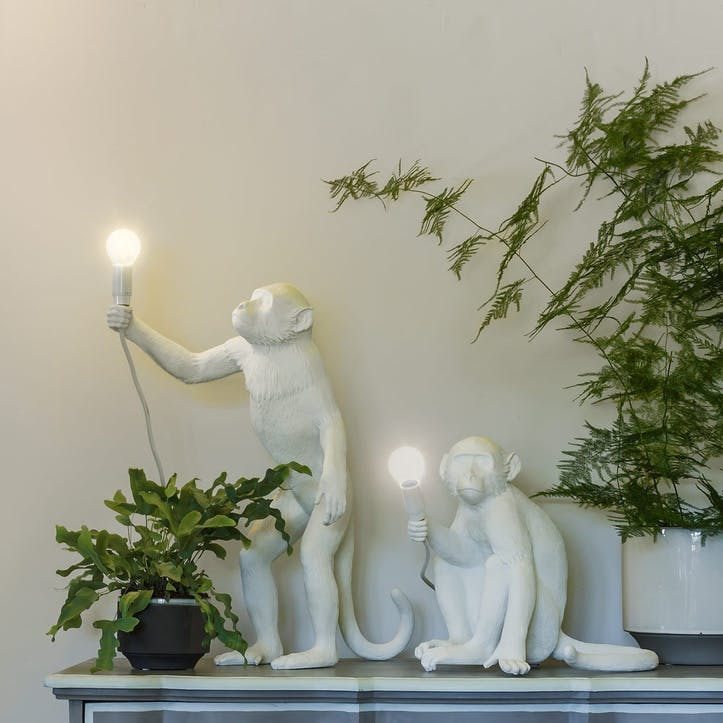 Monkey Light, Standing