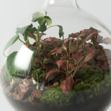 Medium Boiling Flask Terrarium H30 x D16cm