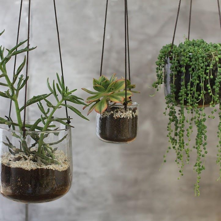 Viri Hanging Planter- Medium; Clear