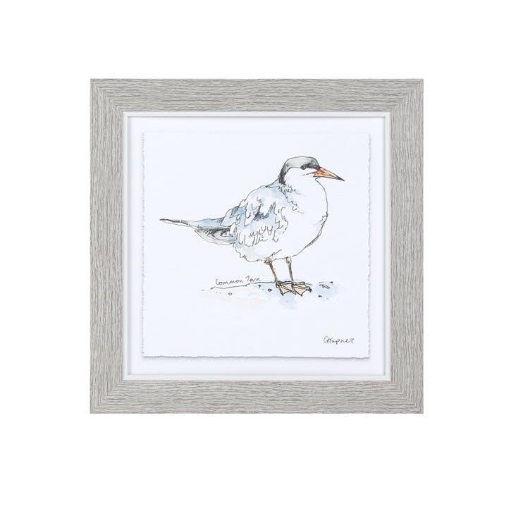 Common Tern Framed Print - 25 x 25cm