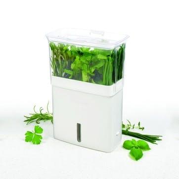 Fresh Cut Herb Keeper