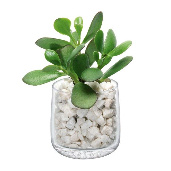 Market, Tealight Holder/Vase/Planter, Clear