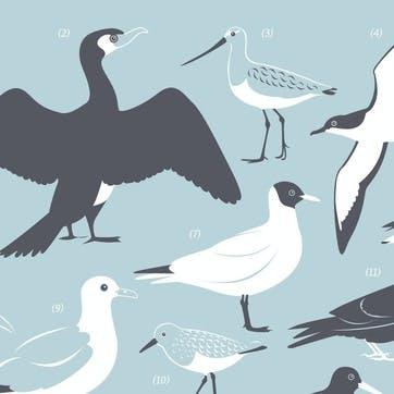 British Coast Sea & Estuary Birds Screen Print, 30cm x 40cm, Duck Egg Blue