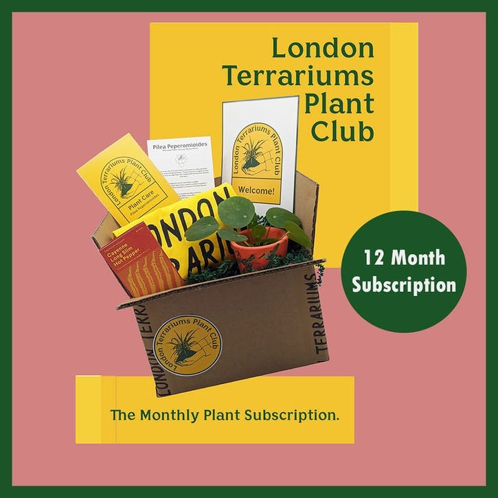 12 Month Plant Club Subscription