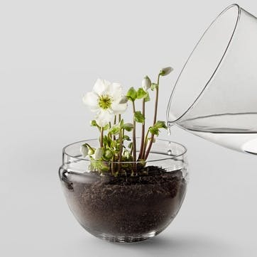 Grow Greenhouse Large. Clear