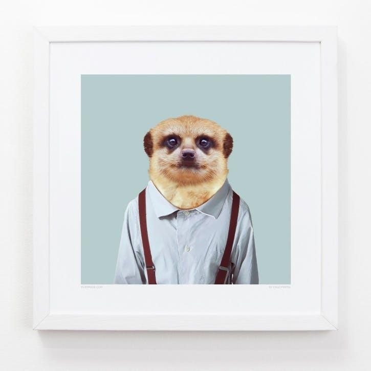 Zoo Portrait Print Meerkat, 33cm x 33cm