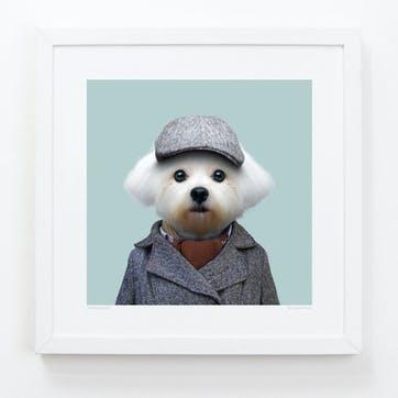 Zoo Portrait Maltese Dog, 33cm x 33cm