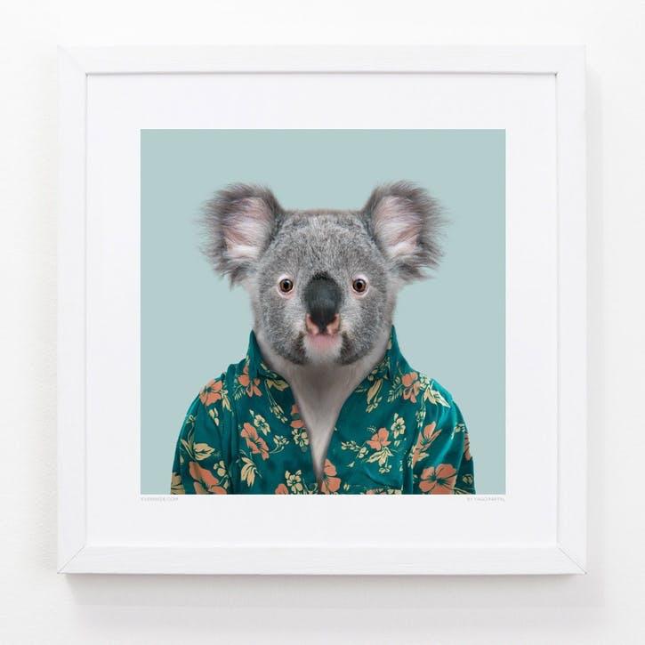 Zoo Portrait Print Koala, 33cm x 33cm