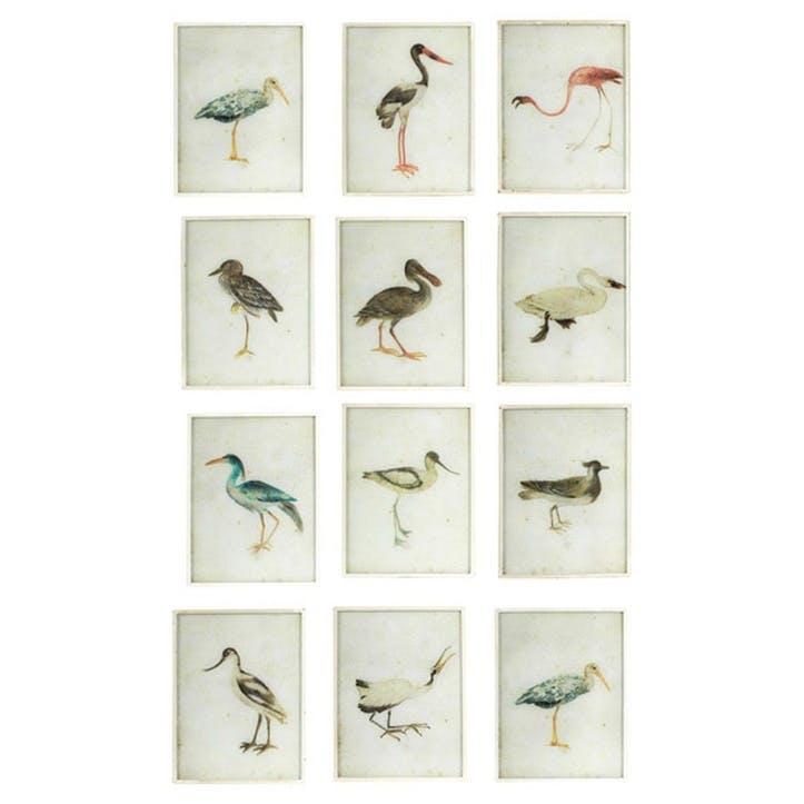 Set of 12 Bird Paintings