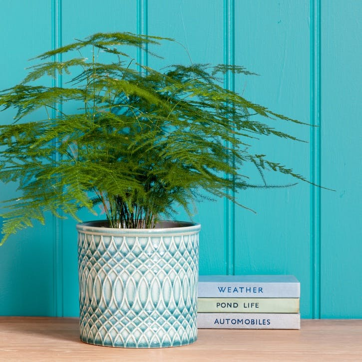 Morocco Glazed Plant Pot; Large