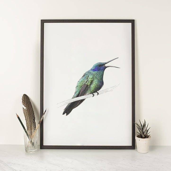 Sparkling Violetear Hummingbird - A4