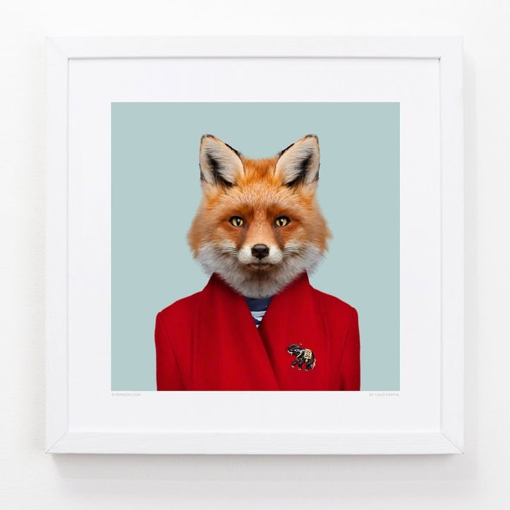 Zoo Portrait Red Fox, 33cm x 33cm