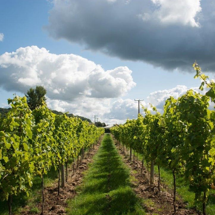 Vineyard Tour and Tasting for Two at Aldwick Court Farm & Vineyard