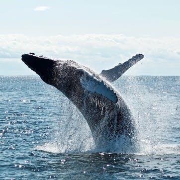 Honeymoon Whale Watching Experience £50