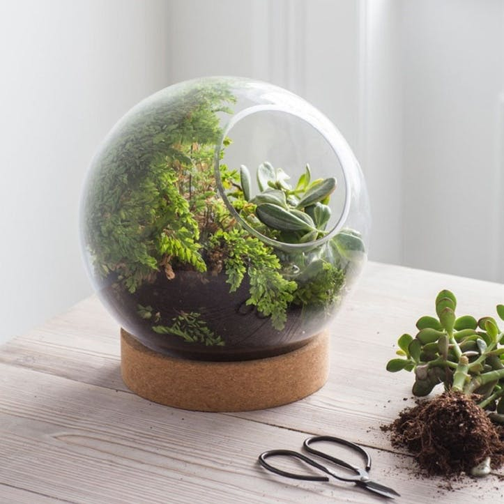 Tabletop Terrarium with Cork Base, Large