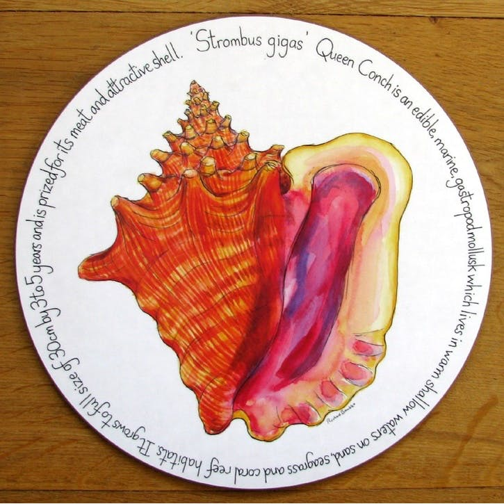 Conch Shell Tablemat - 28cm