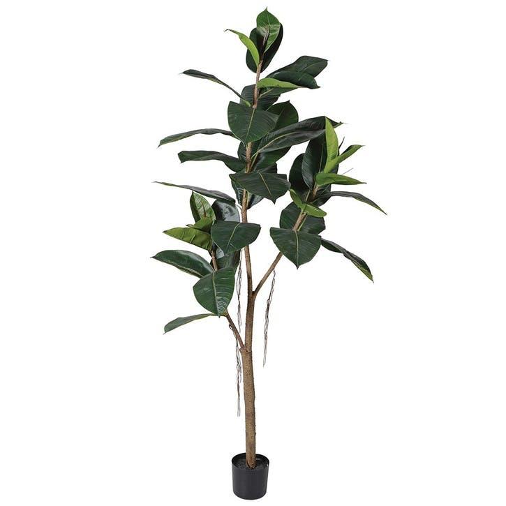 Artificial  Rubber Tree