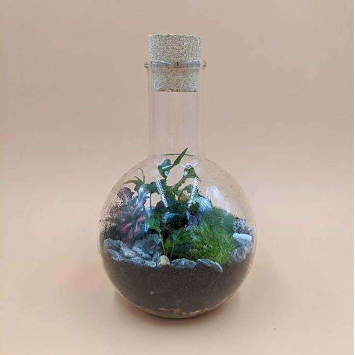 Small Boiling Flask Terrarium H22 x D13cm