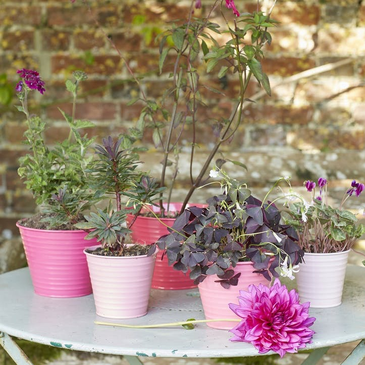 Ombre Plant Pot, Set of 5, Raspberry