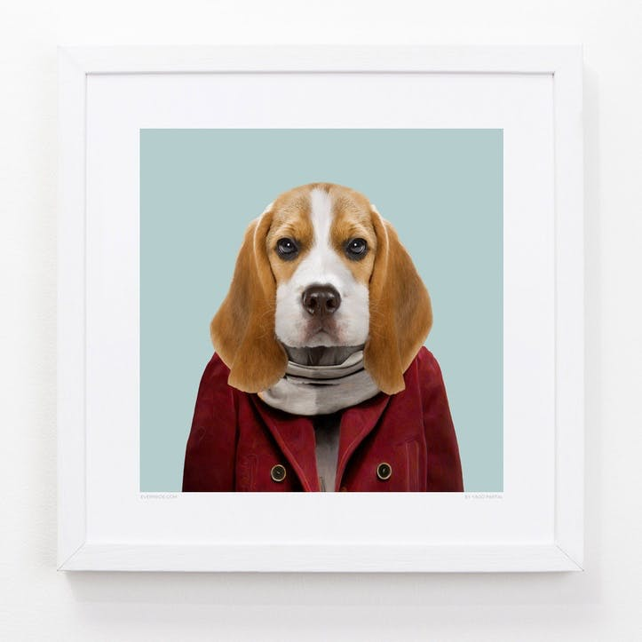 Zoo Portrait Beagle Puppy, 33cm x 33cm