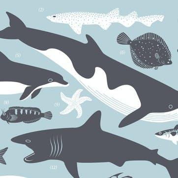 British Coast Marine Life Screen Print, 30cm x 40xm, Duck Egg Blue