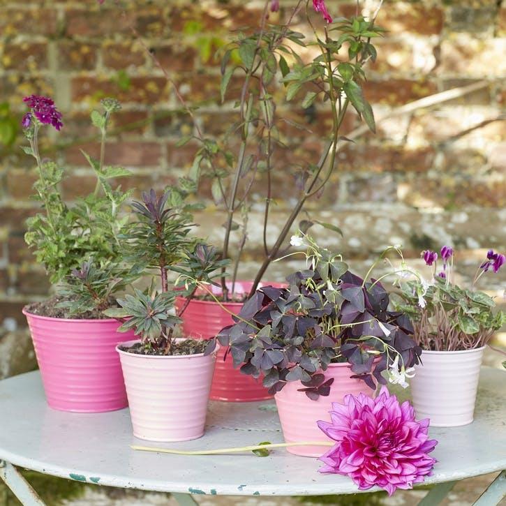 Ombre Plant Pots, Set of 5, Raspberry