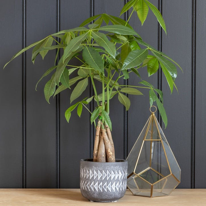 Aztec Indoor Plant Pot; Large