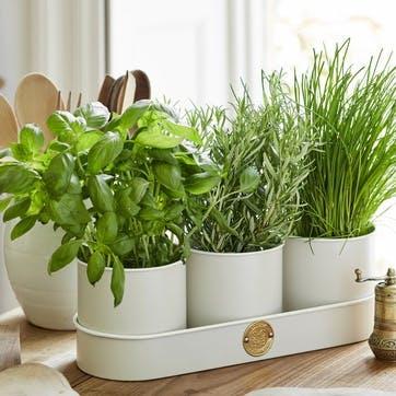 Herb Pot, Set of 3