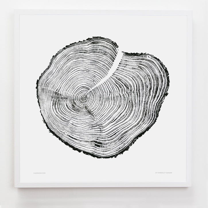 Tree Print Western Red Cedar, 61cm x 61cm