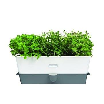 Fresh Self Watering Triple Herb Keeper