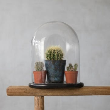 Taxidermy Glass Dome