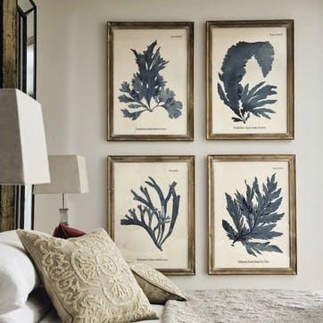 Seaweed Framed Prints, Set of 4