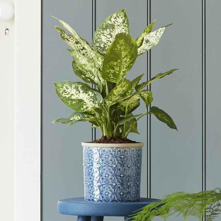Porto Indoor Plant Pot; Dark Blue