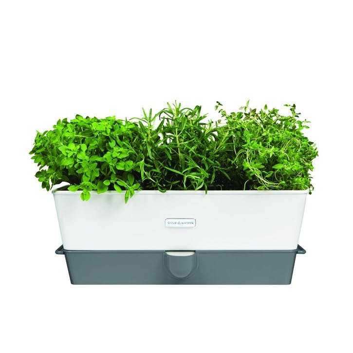 Fresh Self Watering Triple Herb Keeper