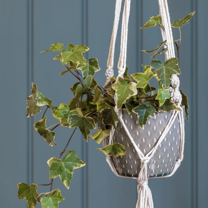 Macrame Hanging Indoor Planter